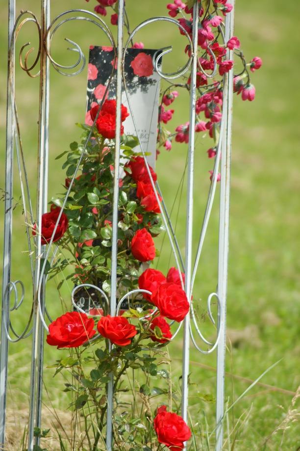 Bloemen nemen een voorname plaats in op onze camping.